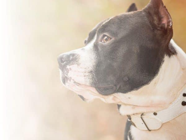 Psicotécnico para Propietarios de Animales Potencialmente Peligrosos